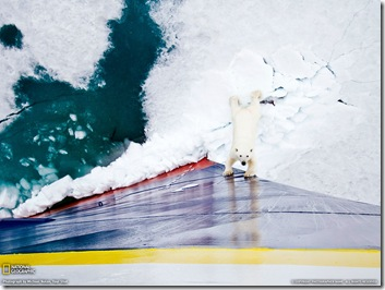 National-Geographic---Photograph by Michael Nolan, Your Shot, http://photography.nationalgeographic.com/photo-of-the-day/polar-bear-ship-norway/